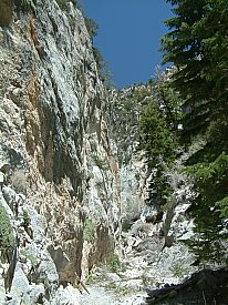 Fletcher Canyon, Mount Charleston